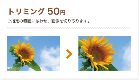 トリミング 50円