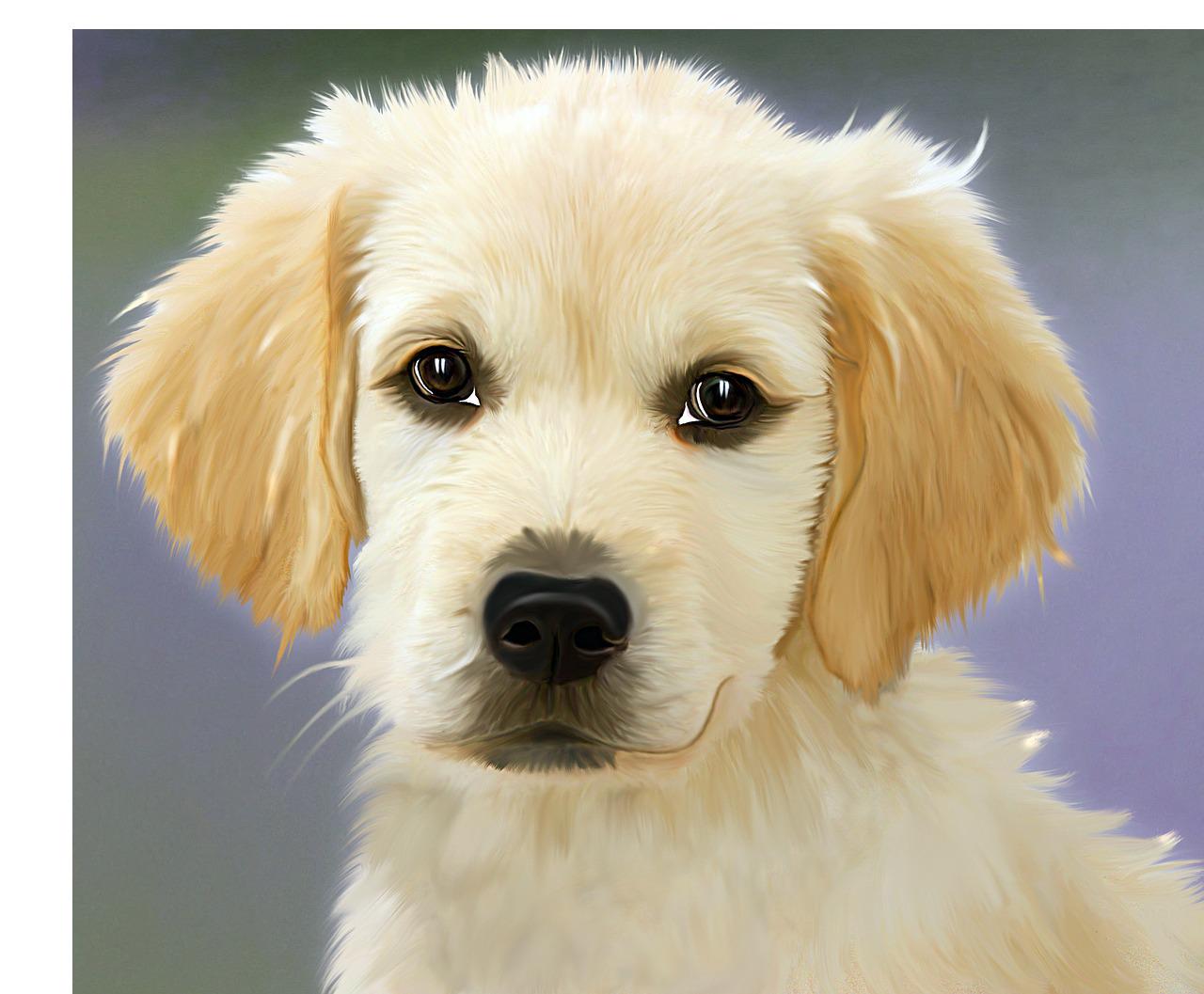 犬画像の切り抜きは【フォトキル】